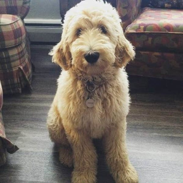 Bentley is the puppy behind 'fur-ternity leave' at Mpls. company