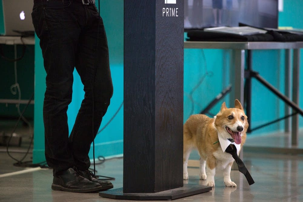 Dog at tech graduation