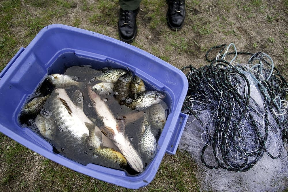 Confiscated fish