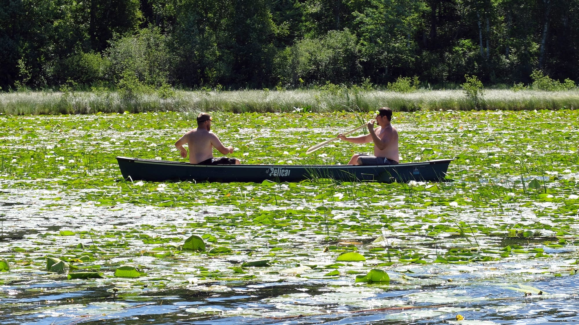 Scouting on Spider Lake in Itasca County, Minn.