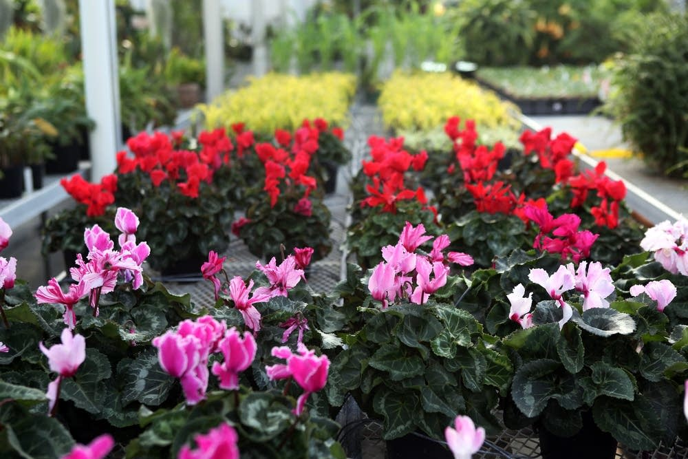 Conservatory horticulturist