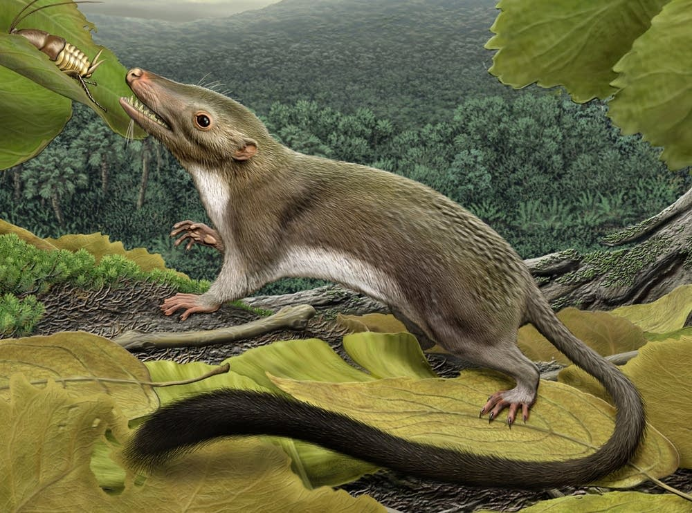 Mammal ancestor