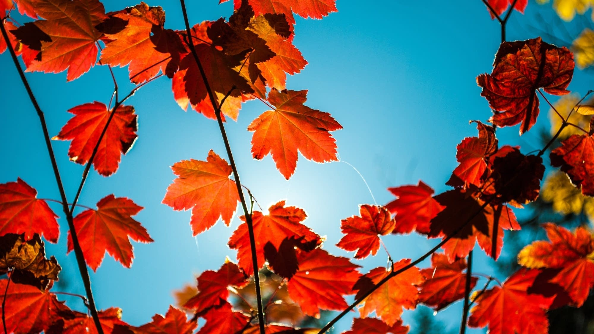 celebrate autumn with our specially curated classical music playlist