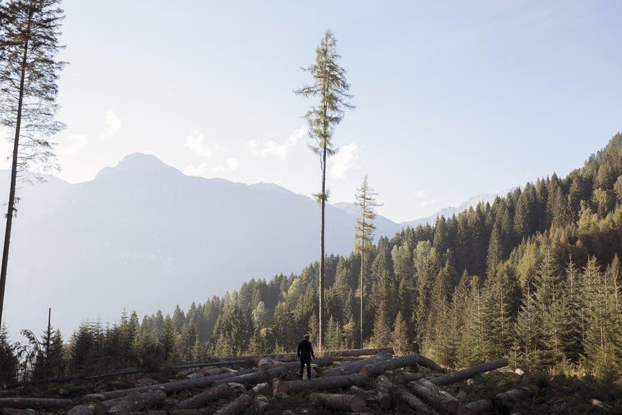 100 million more trees