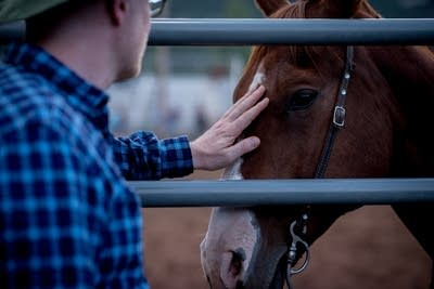 9bc260 20140715 petting a horse at the snowmass rodeo