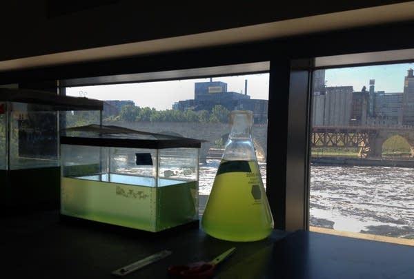 Studying algae