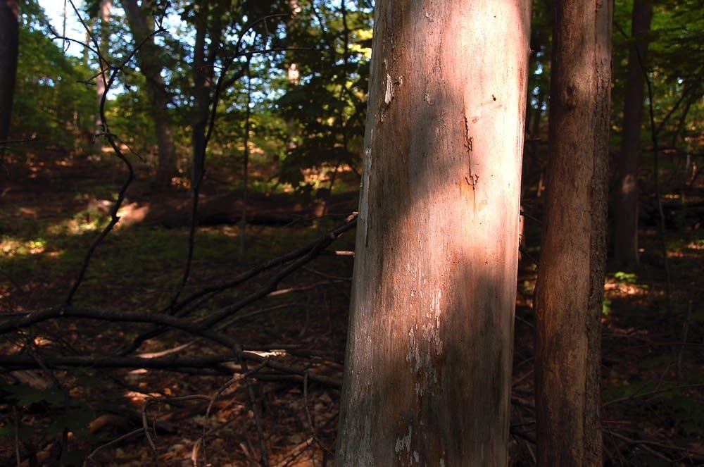 Eden Prairie trail