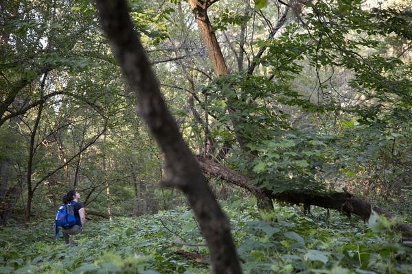 A woman in the distance as she hikes in the forest.