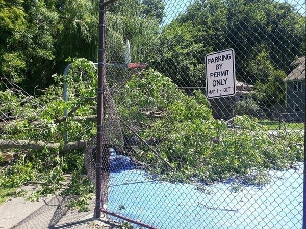 529 tree vs. tennis courts