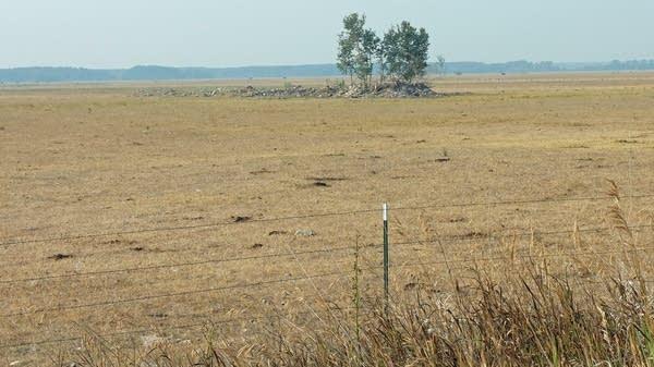 a field of brown grass