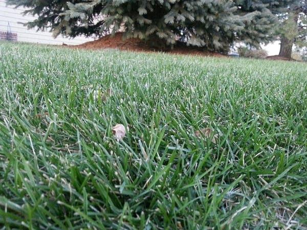 1123 green grass