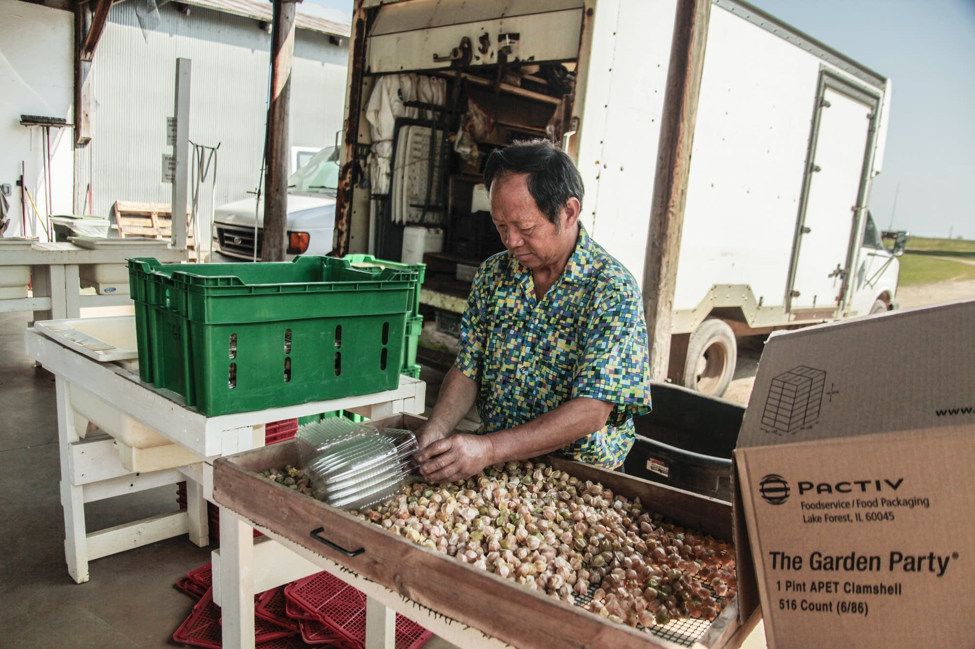 A man picks cherries to haul to local markets.