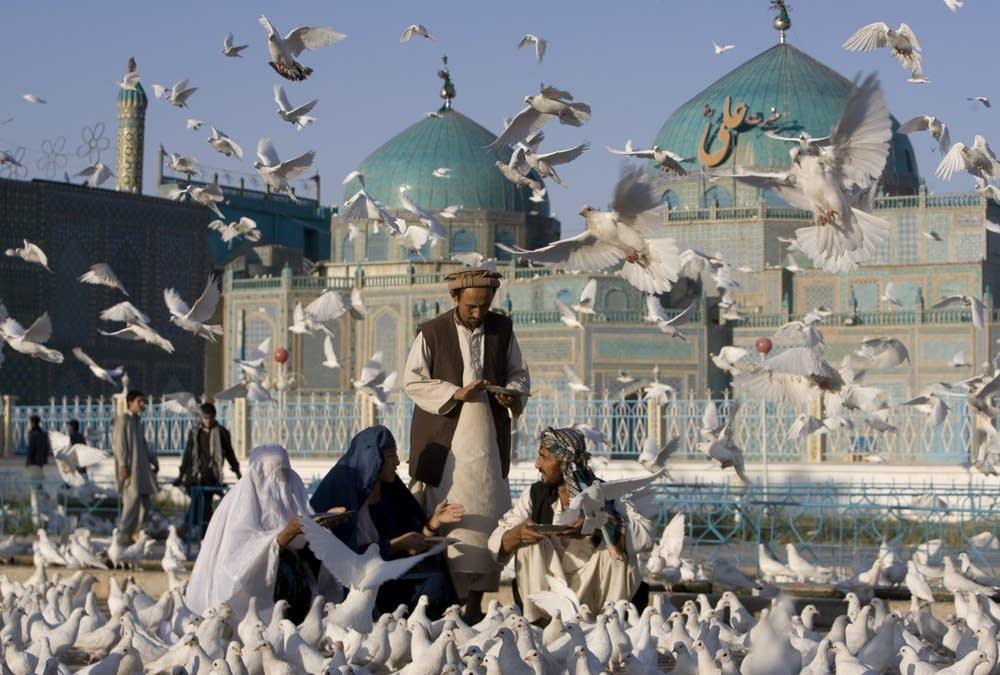 Afghans feed pigeons