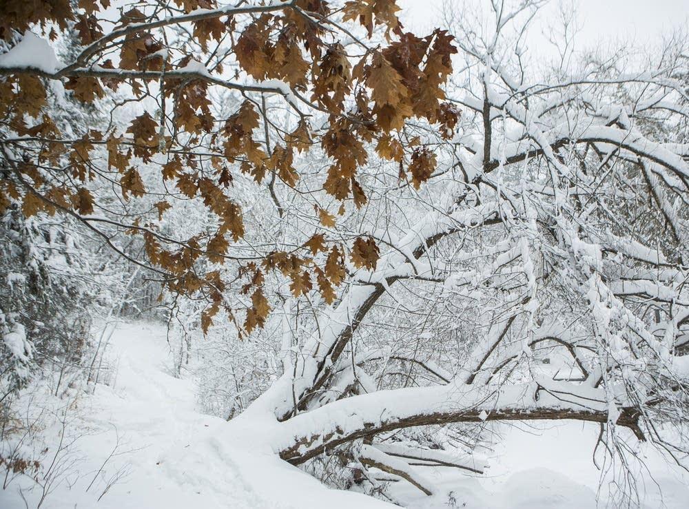 Duluth snow