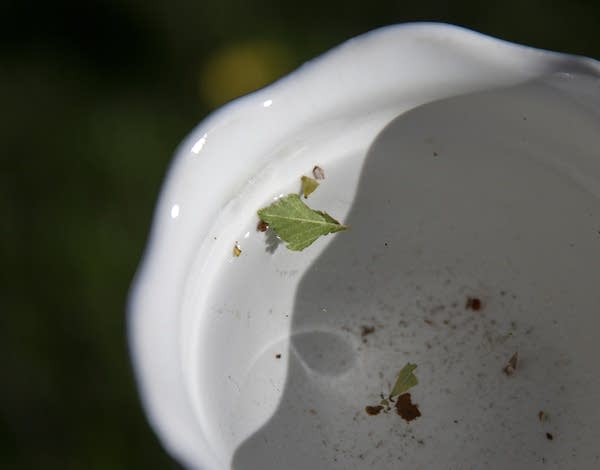 A small piece of a leaf floats in a white ceramic flower.