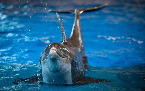 Minnesota Zoo dolphins