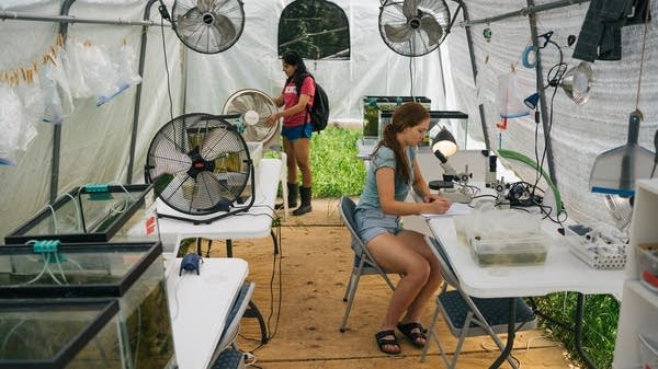 Two young women work in a tent with fish tanks.