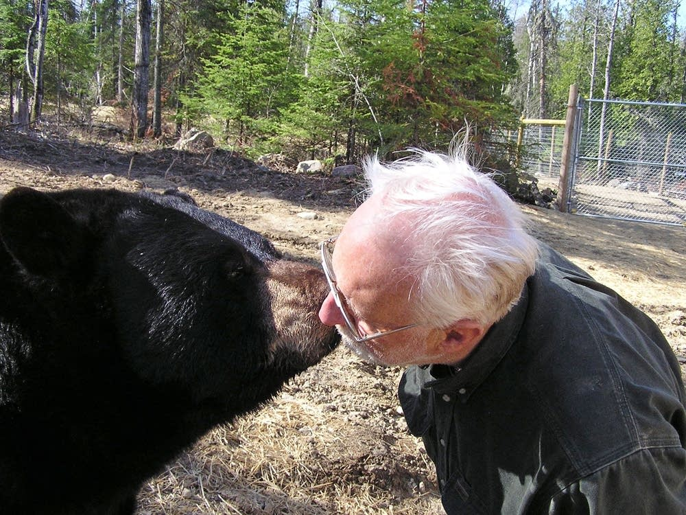 Kissing a bear