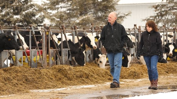Jerry and Linda Jennissen have about 365 head of dairy cattle.