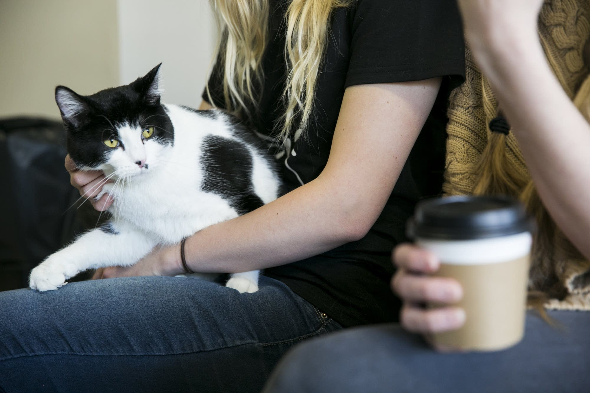 Annabelle sits in the lap of Cafe Meow owner Jessica Burge