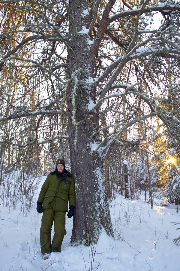 Austin Homkes stands next to a mammoth jack pine.
