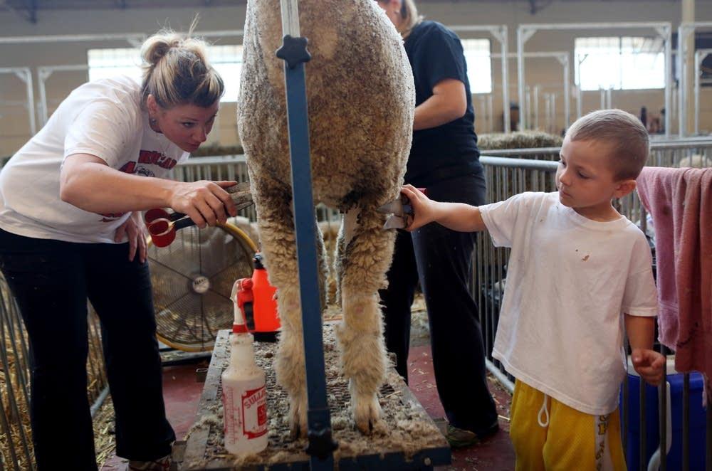 Gunner Liebl, clipping a lamb