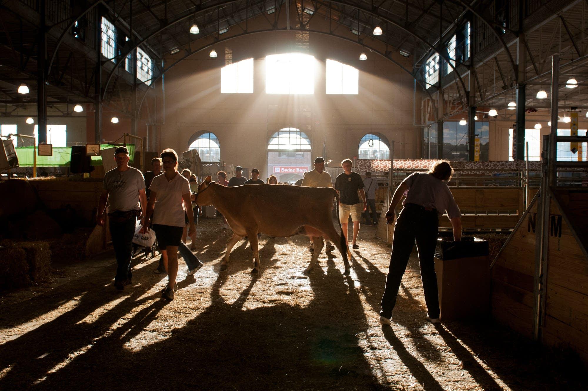 'Cattle Crossing,' 2010