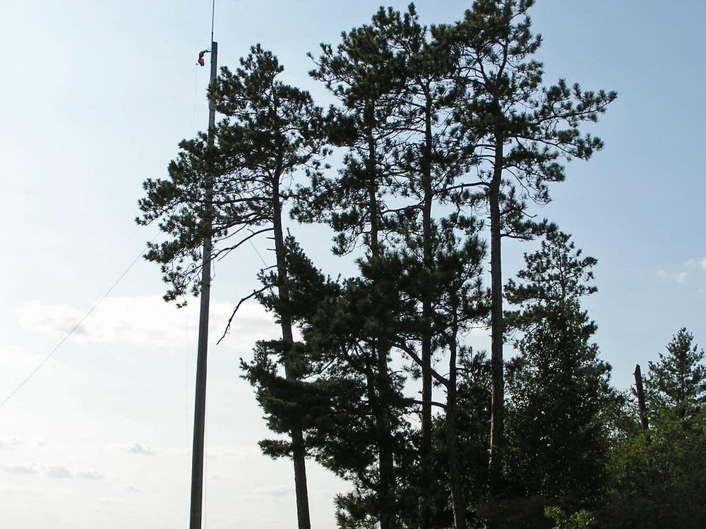 Encroaching trees
