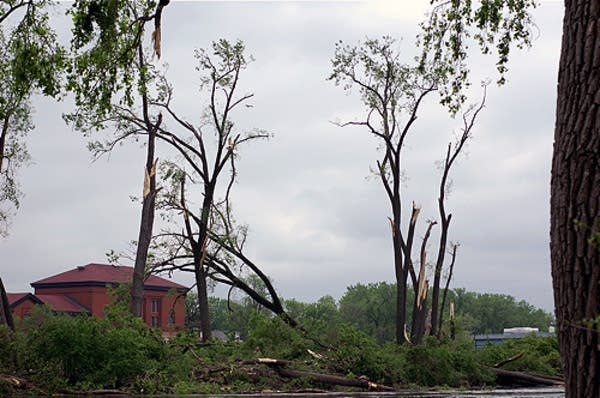 Heron rookery damage