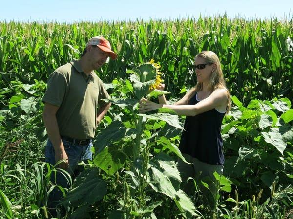 Researchers Jonathan Lundgren and Chrissy Mogren