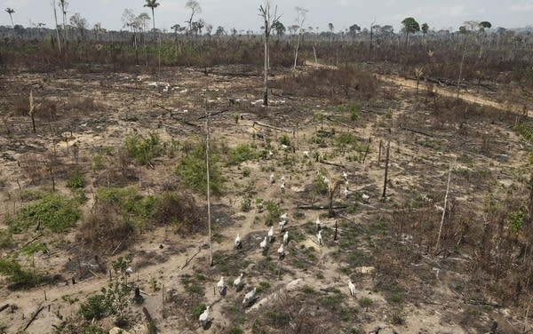 Hunger for carbon offsets is blinding us to their lack of climate benefit