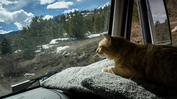 Percy looks out the window