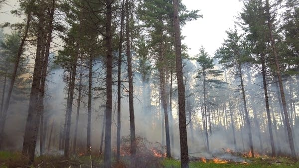 The Pitcha Pine prescribed fire burned about 100 acres