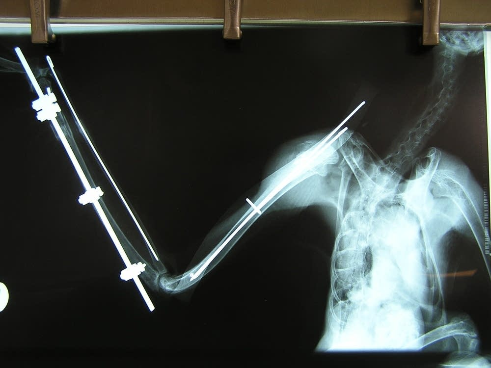 Owl X-ray