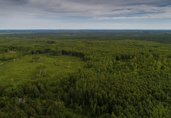 A birds-eye view of the forest.