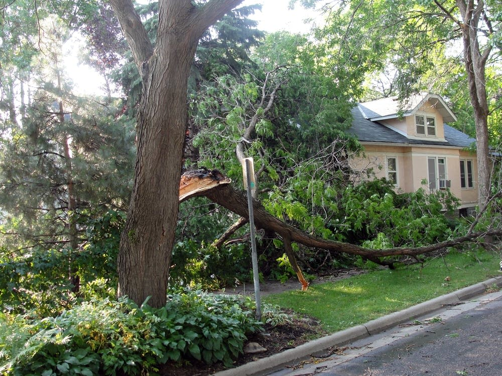 Storm-damaged tree
