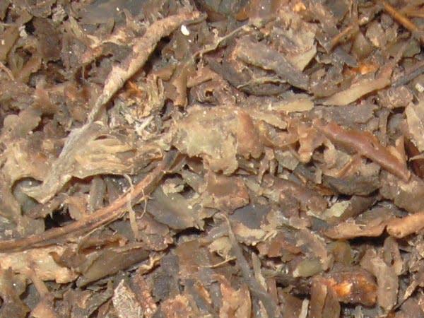 Sugar beet waste