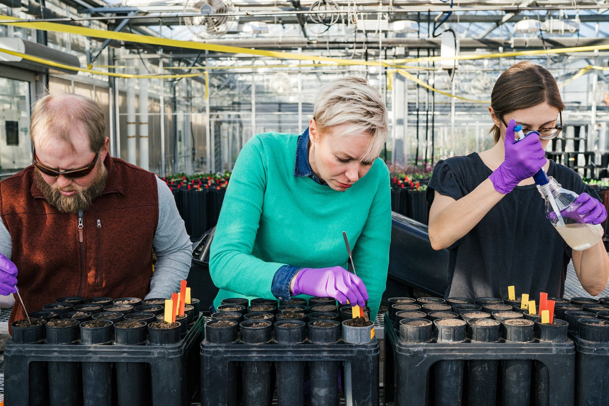 Plant pathology researchers prepare an experiment.