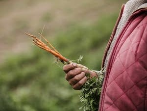 Sarah Woutat holds carrots she grows at Uproot Farm in Princeton, Minn.