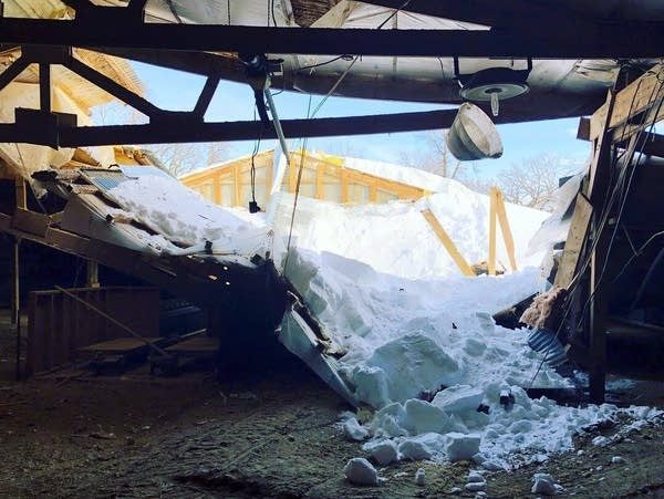 The collapsed roof on Erica Sawatzke family's turkey laying barn