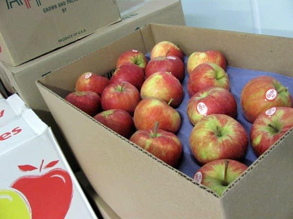 Minnesota-grown apples