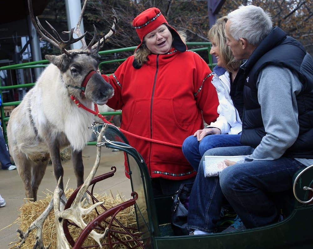 Getting their photo taken with a reindeer