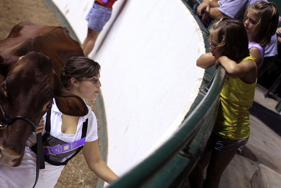 4-H at the fair