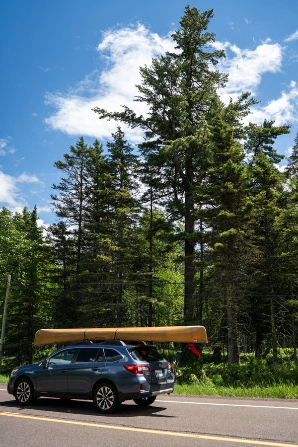 A car with a canoe on top drives past a tall tree.