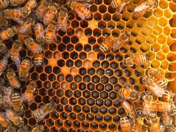 3f8203 20180522 bee sharp 003
