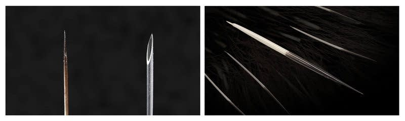 A North American porcupine's quill tip and a narrow, 18-gauge needle.