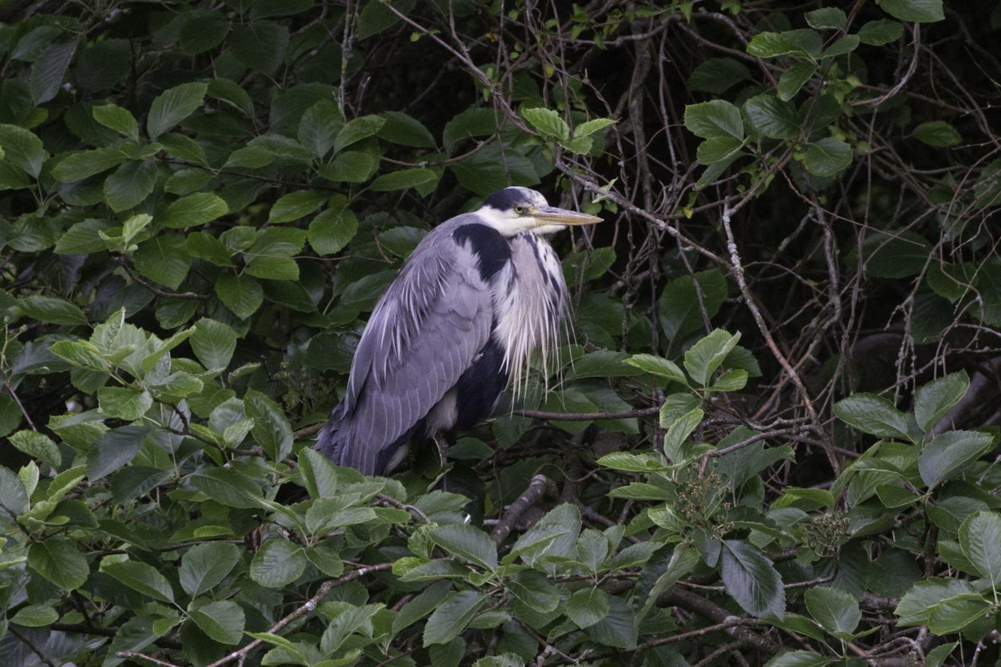 Edinburgh - 29 - Thomas bird 3