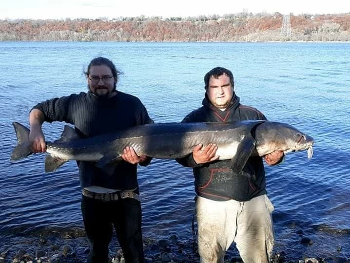 Jeremy Levasseur says he also caught the same St. Croix River sturgeon.