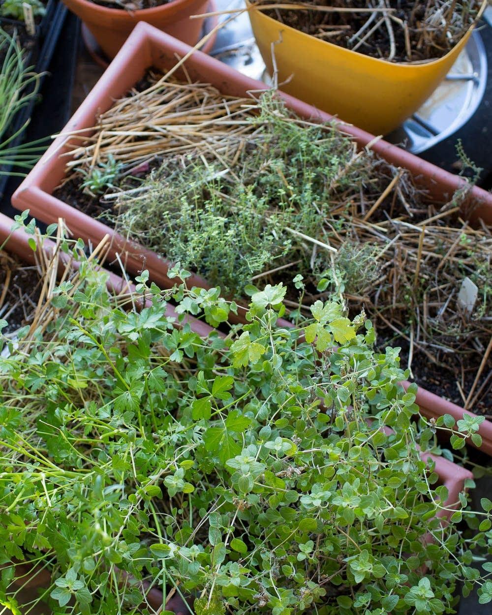 Gardening Tips For March In Minnesota Mpr News