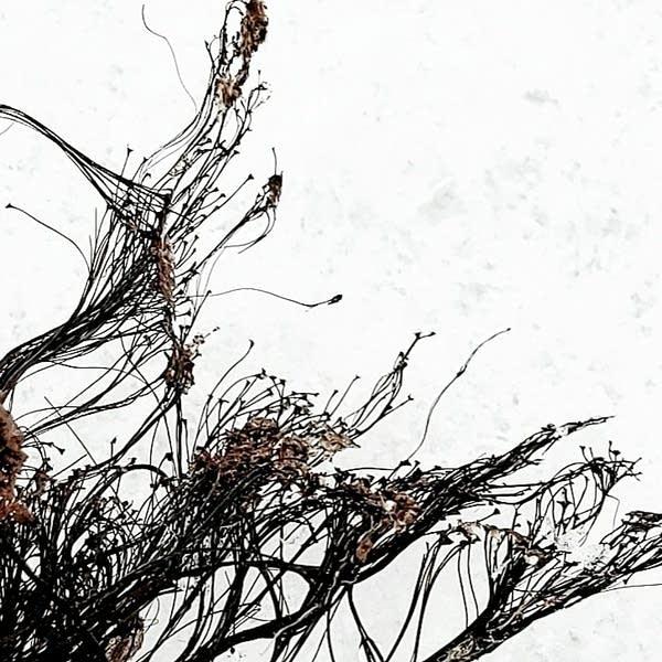 A closeup shot of slime mold spores taken by Nicole Zempel.